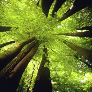 Magic Tree Meditation